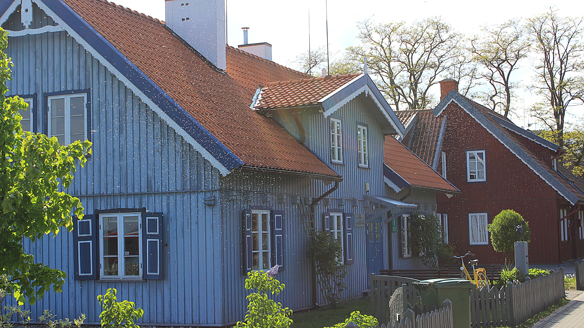 A blue idyllic wooden house with a wooden fence in sunlight and plenty of flying insects in front.