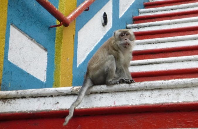This Malaysian monkey didn't seem to plan to much. Be like the monkey.