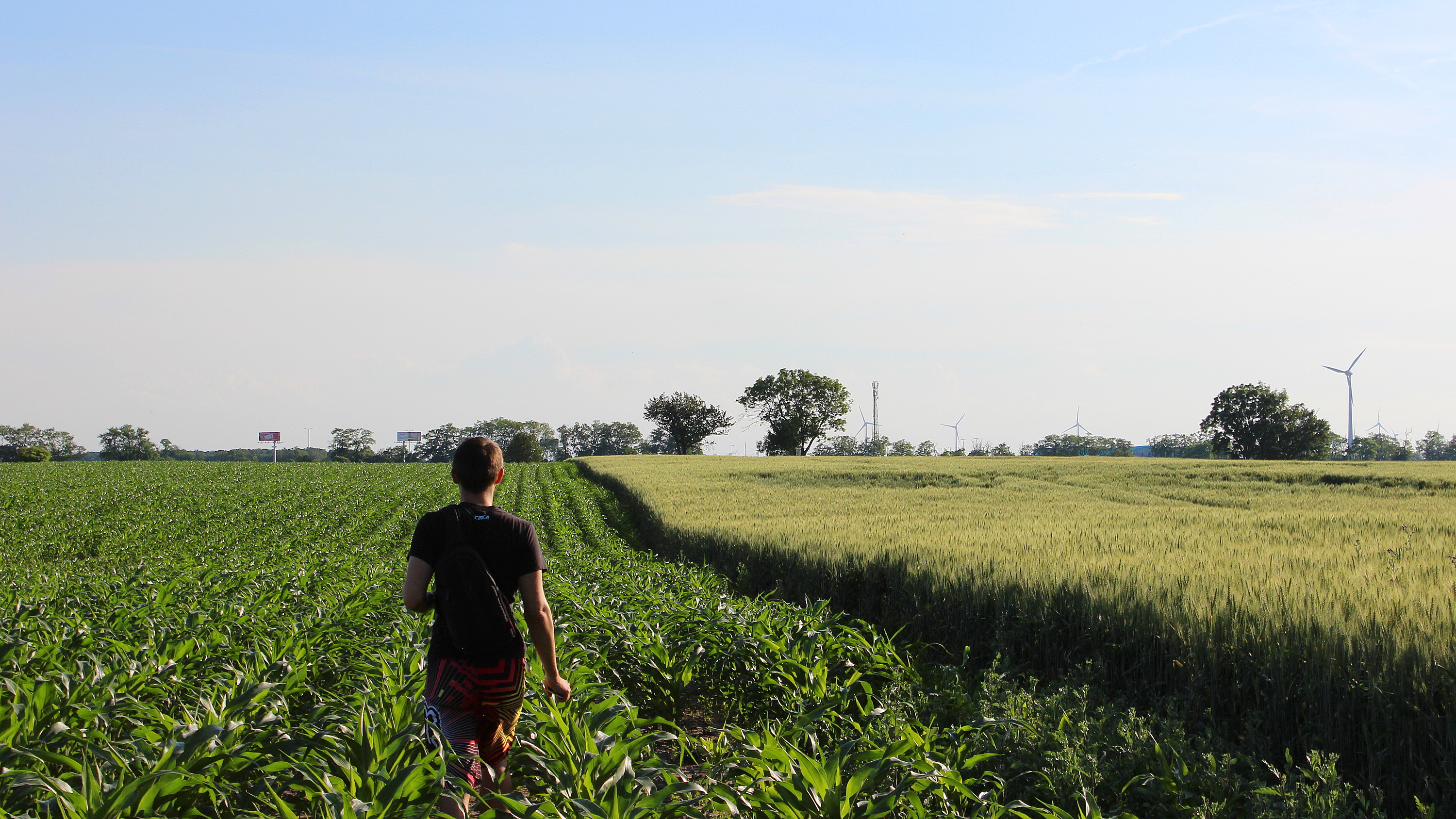 A man walking to the horizon on a corn field during sunset.