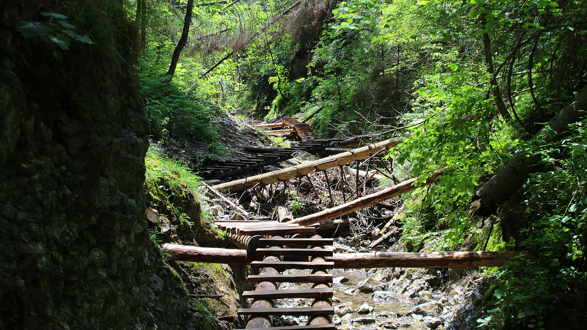 Wooden ladders on a narrow and lush gorge in Slovak Paradise National Park.